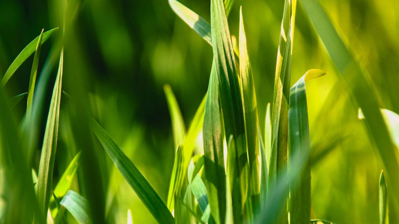 Сјај у трави
