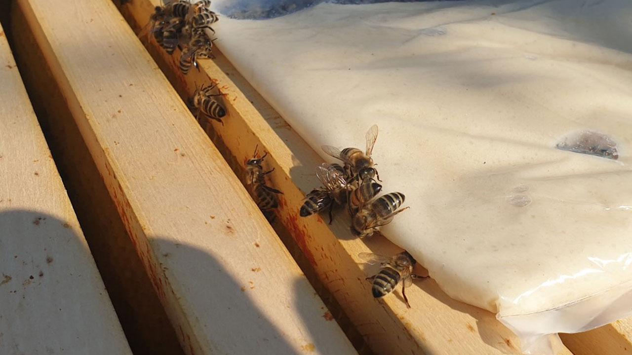 Пчеле